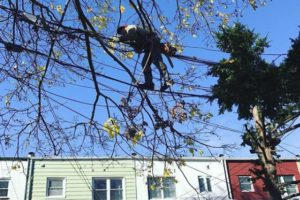 Queens Tree Removal Service