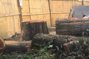 Staten Island Tree Removal