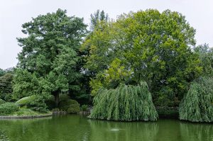 Brooklyn Botanic Gardens are a place where people find peace and quiet in NYC.