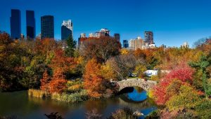 A view of Central Park in New York.