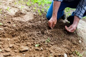 7 Steps to Growing Your Own Vegetable Garden