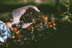 Fall Gardening To-Do List